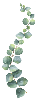 eucalipto laterale sx