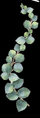 eucalipto-laterale sx